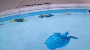 Pool art